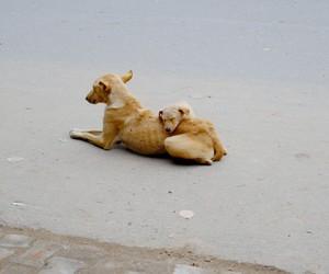dogs, sad, and loyal image