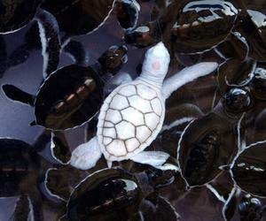 turtle, animal, and white image