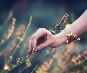 flowers, hand, and nails image