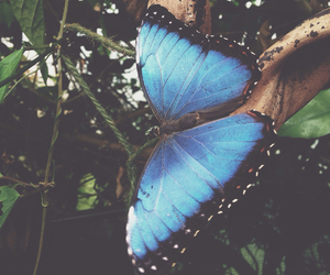 beautiful, pretty, and butterfly image