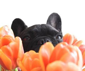 bulldog, flowers, and french image
