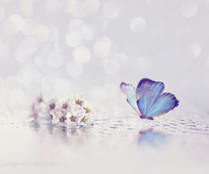 butterfly, ethereal, and happy image