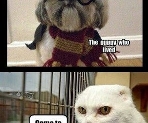 harry potter, cat, and voldemort image