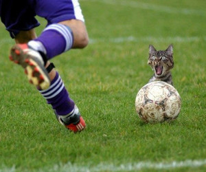 cat, soccer, and posterous by john image