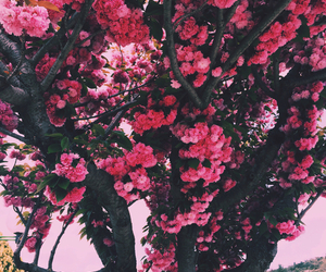 flowers, nature, and fashion image