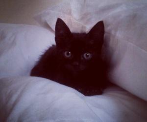 black, cat, and dark image