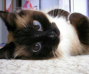 cute, animals, and cats image