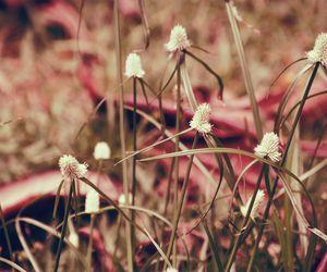 fields, inspiracao, and lightness image