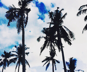 coconut trees, Philippines, and travel image