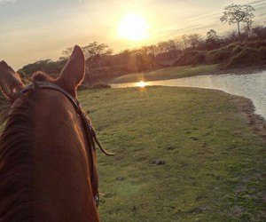 horse, river, and sun image