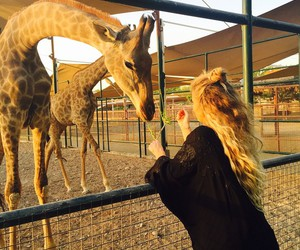 Dubai, safari, and girl image