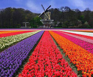 colours, fans, and flowers image