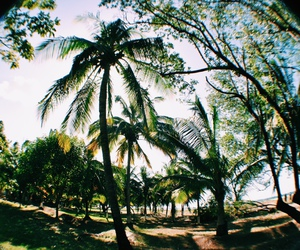 palm trees, summer, and tropical image