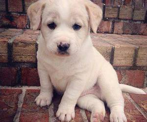 dog, baby animals, and cute animals image