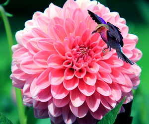 flowers, hummingbirds, and nature image