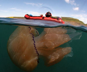 giant and jellyfish image