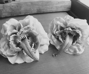 black and white, roses, and differences image