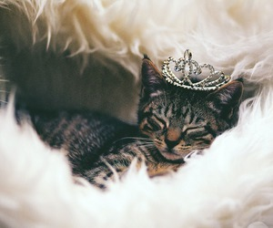 cat, crown, and cute image
