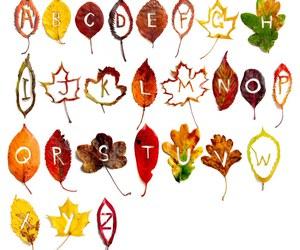alphabet, design, and leaf image