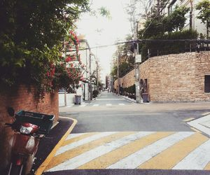 roses, seoul, and street image