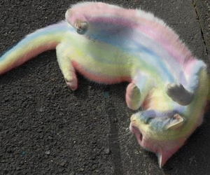 cat, rainbow, and grunge image
