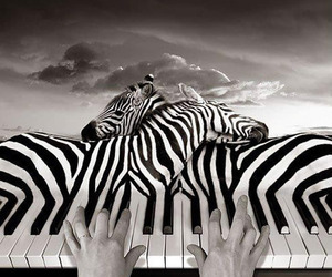 art, zebra, and black and white image