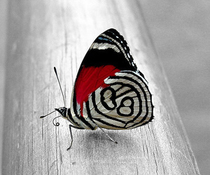 butterfly, red, and black image