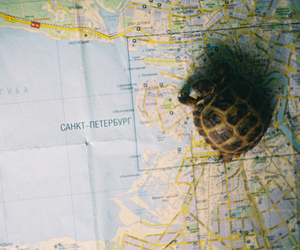 turtle and map image