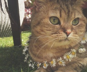 cat and flowers image