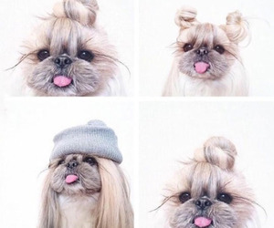 animals, dog, and fashion image