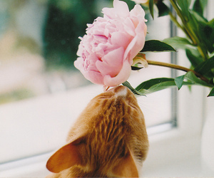 cat, flower, and cute image