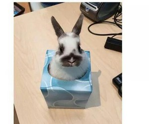 bunny, funny, and tissue image