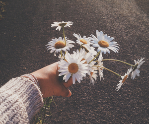 flowers, tumblr, and summer image