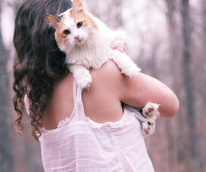 cat, girl, and curls image