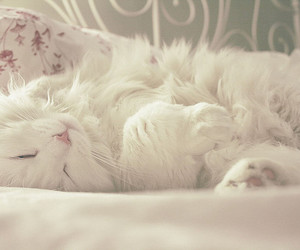 cat, white, and kitty image