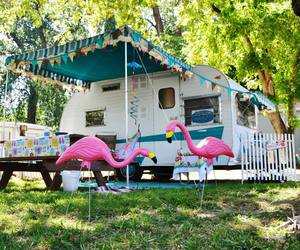flamingos, rockabilly, and vintage image