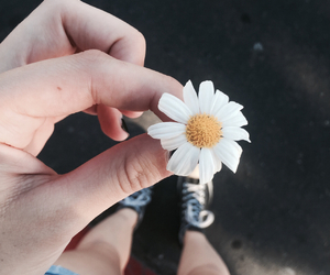 daises, flower, and flowers image