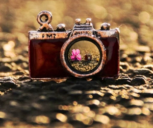 camera, flower, and old image