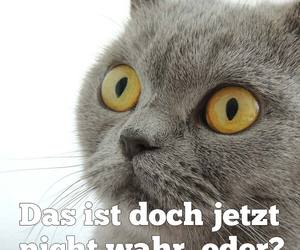 cat, spruch, and statement image