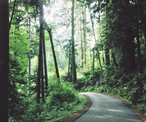green, pretty, and road image