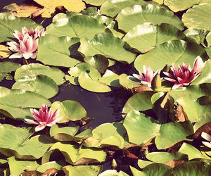 etsy, photography, and pond image