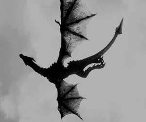 dragon, black and white, and fly image