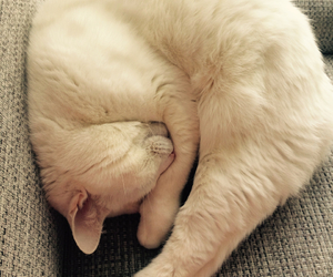 cat, sweet, and white image