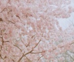 header, Harry Styles, and twitter pack image