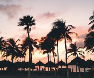 beach, palms, and sunset image