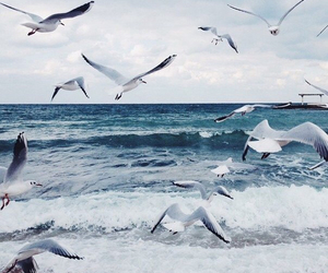 albatross, no line on the horizon, and endless sea image