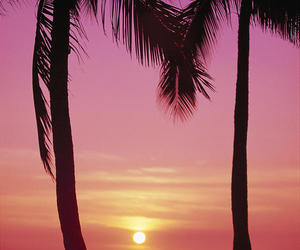 palm trees, sunset, and pink image