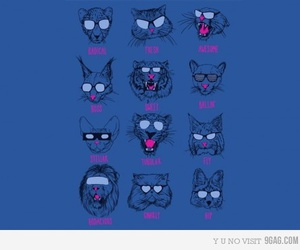 cool cats image