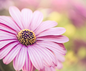 flowers, life, and pink image