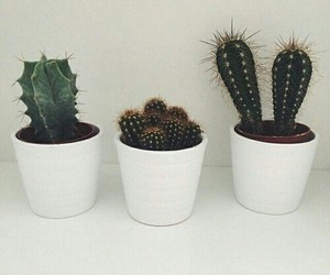 cactus, plants, and white image